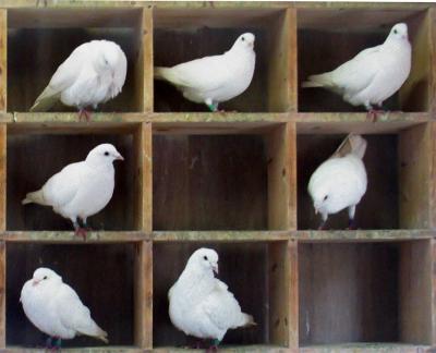Pigeons-in-holes